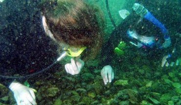 How Much Money Does a Marine Biologist Make? - Tell Me How ...