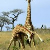 How Much Does a Giraffe Cost?